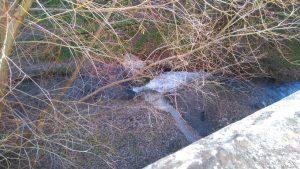 La rivière Darro enclavée